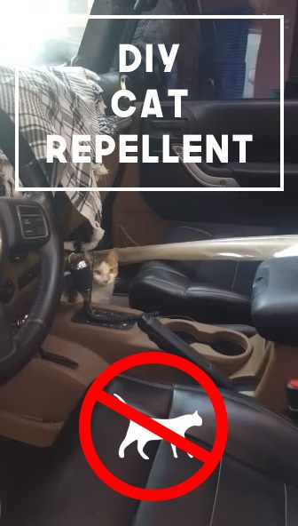 Cat Repellent.jpg