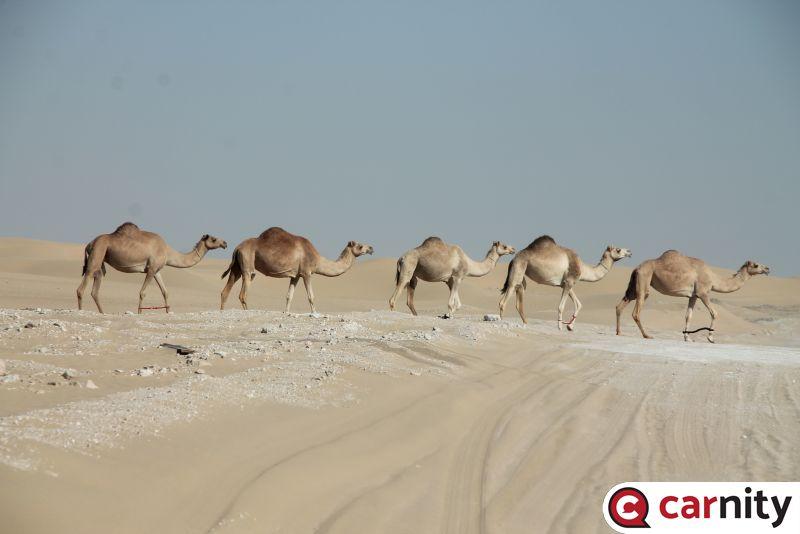 Newbie  - Solar Park - Dubai - 18 Dec 2020