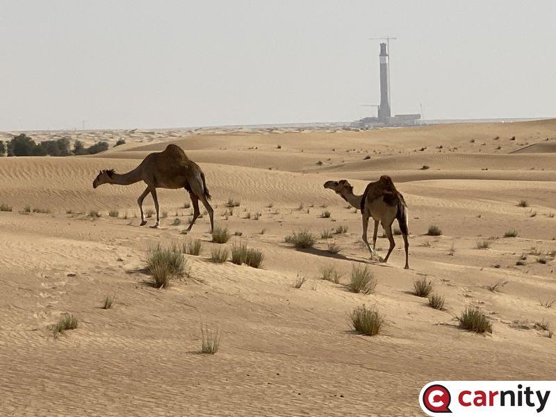 Fewbie - Murquab - Dubai - 07 May 2021